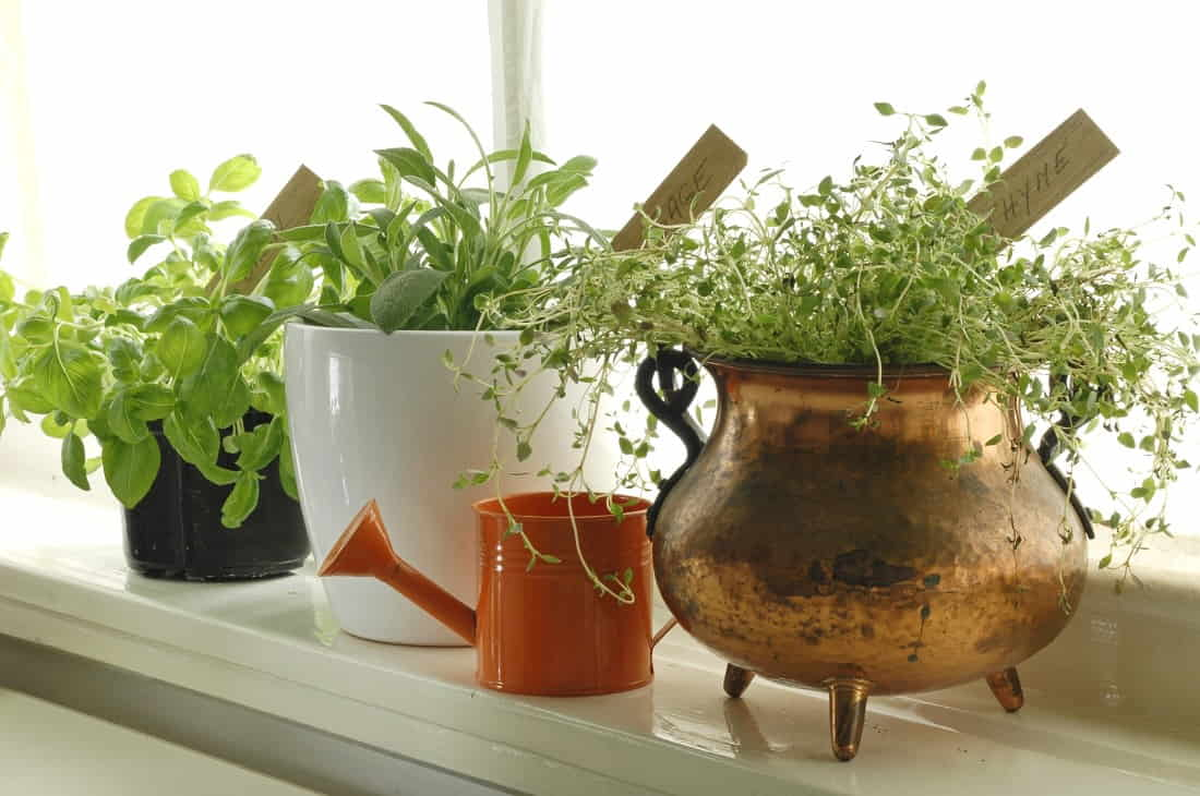 Avoid Dragging Indoor Plants to Protect Your Flooring