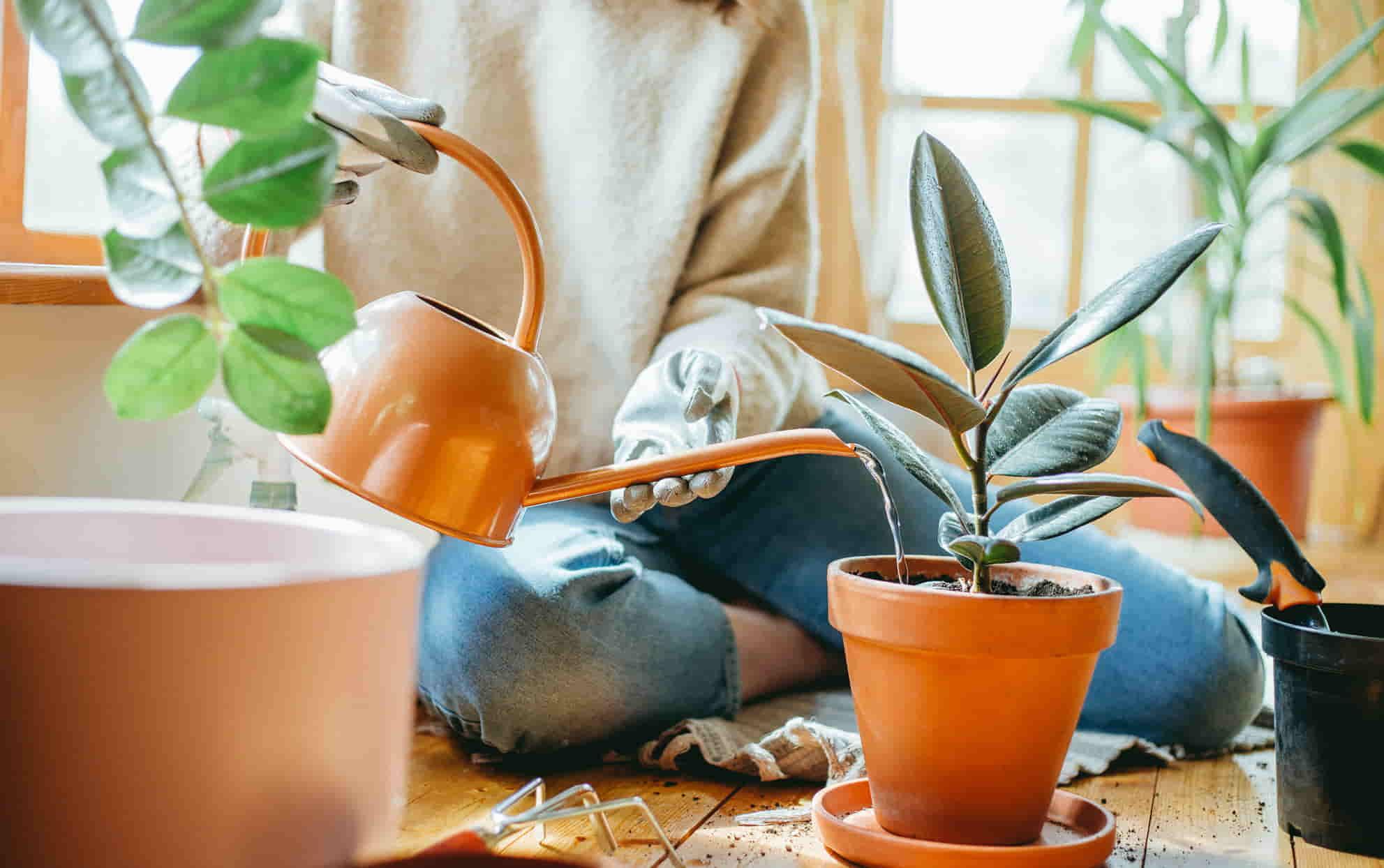 Avoid Over Watering Your Indoor Plants