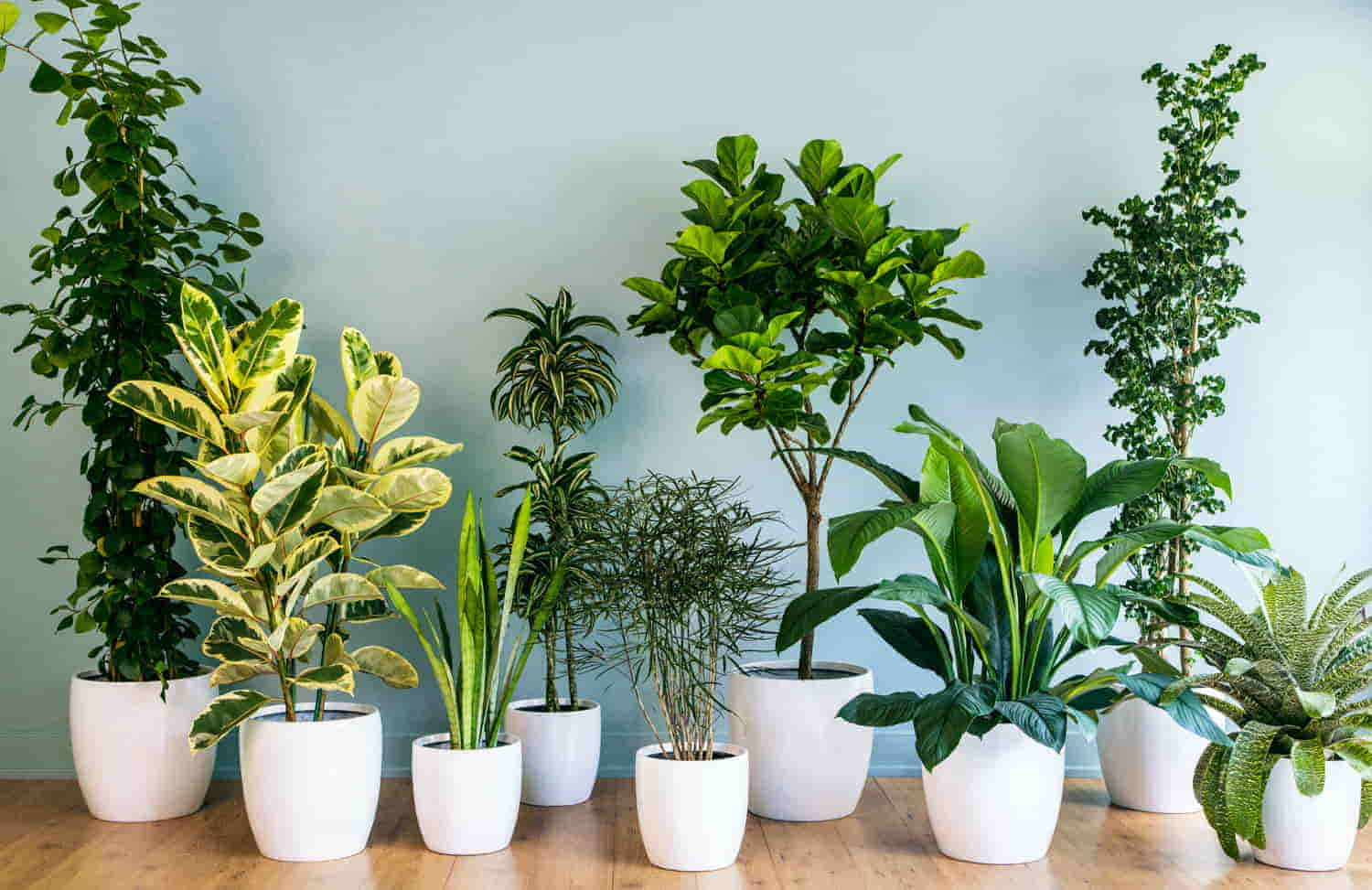 How to Best Protect Your Flooring from Indoor Plants
