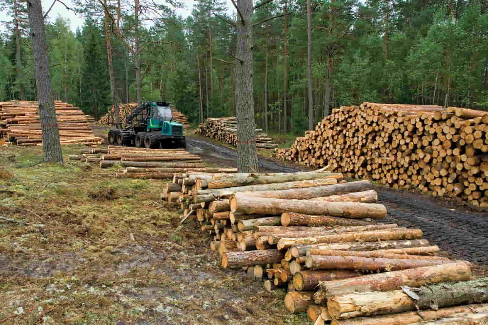 wood harvest
